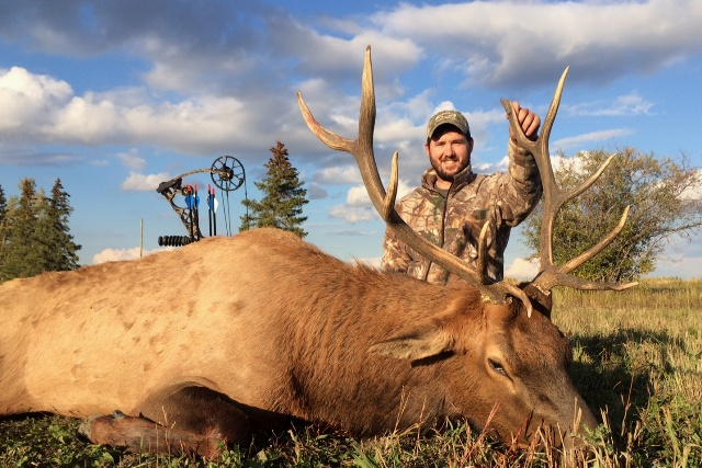 Elk Bowhunting Mikes Outfitting Alberta Canada