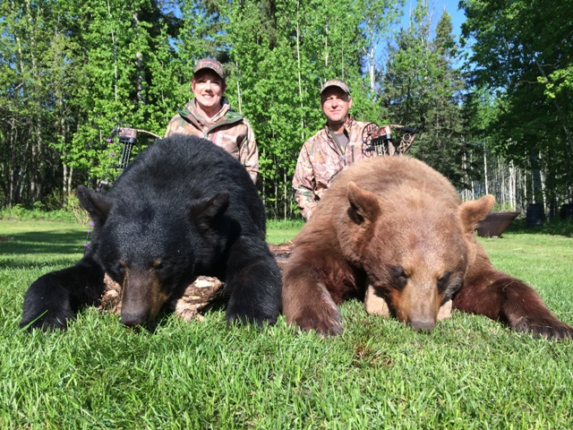 Black Bear Hunts Alberta Canada