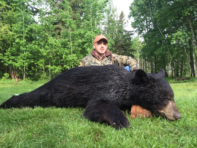 Black Bear Hunting Alberta