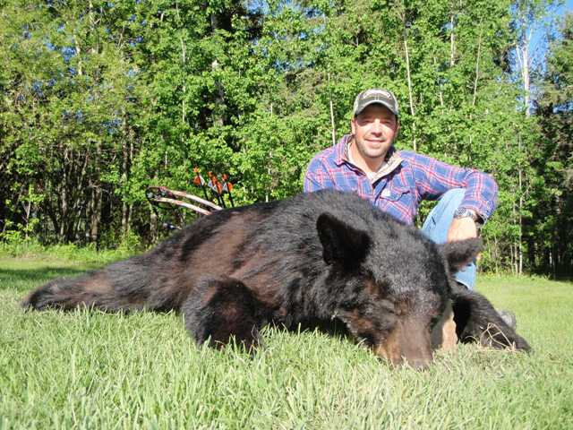 Black bear hunting Mike's Outfitting