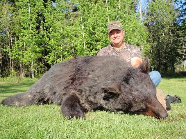 Canada Bear Hunts Mike's Outfitting